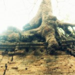 Eerie - a tree growing out of the wat.