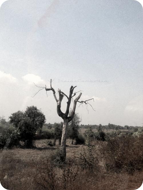 apad 105 dry land