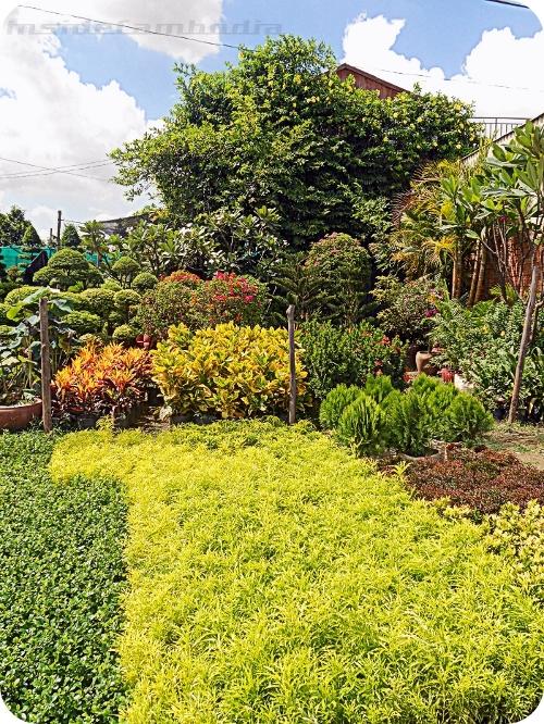 apad 148 secret garden