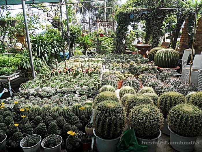 apad 150 cactus cacti