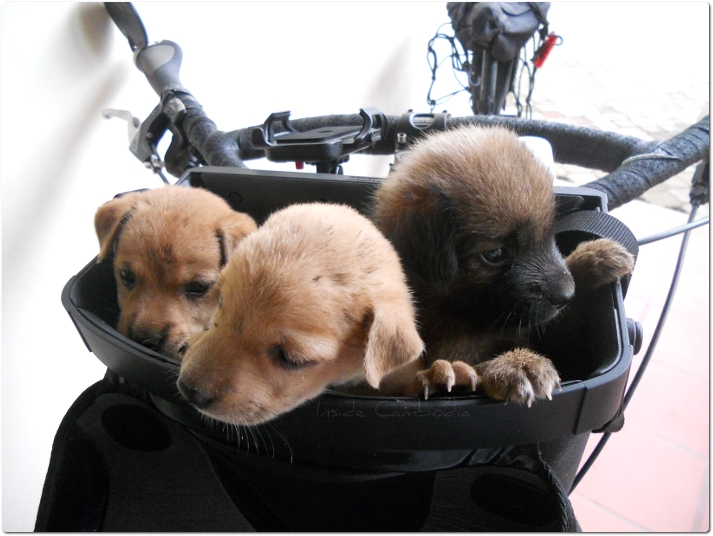 We want to go for a bicycle ride...