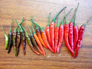 Thai dragon chili peppers colour palette.